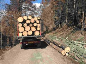 legno-recupero-torino-metropoli-legno-tronchi-rivista-promuovere